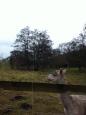 Alpaca at Alfords Mill 2