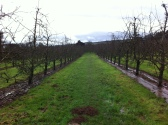 Putley orchard 1