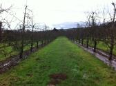 Putley orchard 1