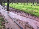 Putley orchard 2