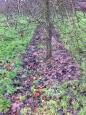 Putley orchard 3