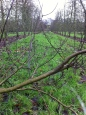 Putley orchard 4