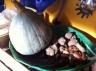 Squash, Jeruaslem artichokes from my neighbour's garden