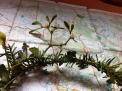 Solstice wreath 2