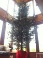 Dragon House tree