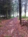 Capler woods