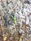 Little green shoots of change