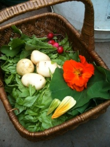 Bath Vale harvest