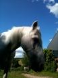 Merlin in the garden, Caplor