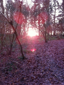 Sunset in Yatton Wood