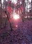 Sunset in Yatton Wood