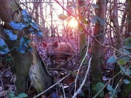 Pigs at Crossington Mill