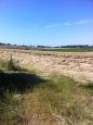 Hay at Pontshill
