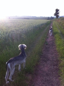 Ash and Cai in the Warren Farm wheat