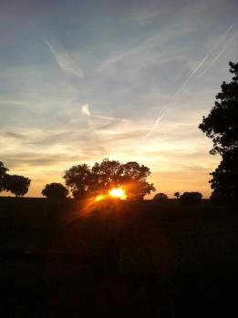 Sunset over Warren Farm maize