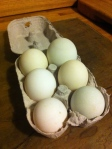 Duck eggs from Aston Crews
