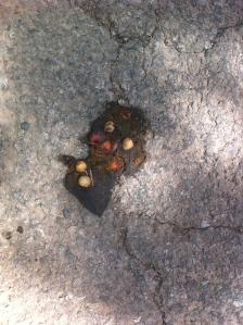Cherry poo