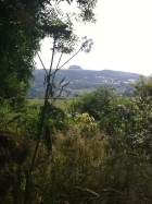 May Hill 2