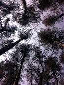 May Hill canopy