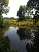 Tibberton Pond