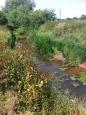 River Leadon