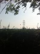 Helium strawberry over Over Farm PYO