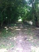 Bartley's Oak holloway