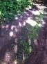 Eaton Park Wood
