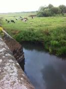 Lugg at Mordiford Bridge