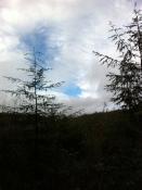 Athelstan's Wood 2