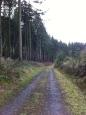 Athelstan's Wood