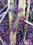 Fungi in Athelstan's Wood