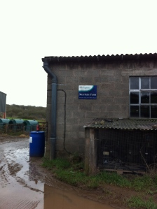 Merrivale Farm Organic Dairy