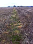 Crop field at Little Dewchurch